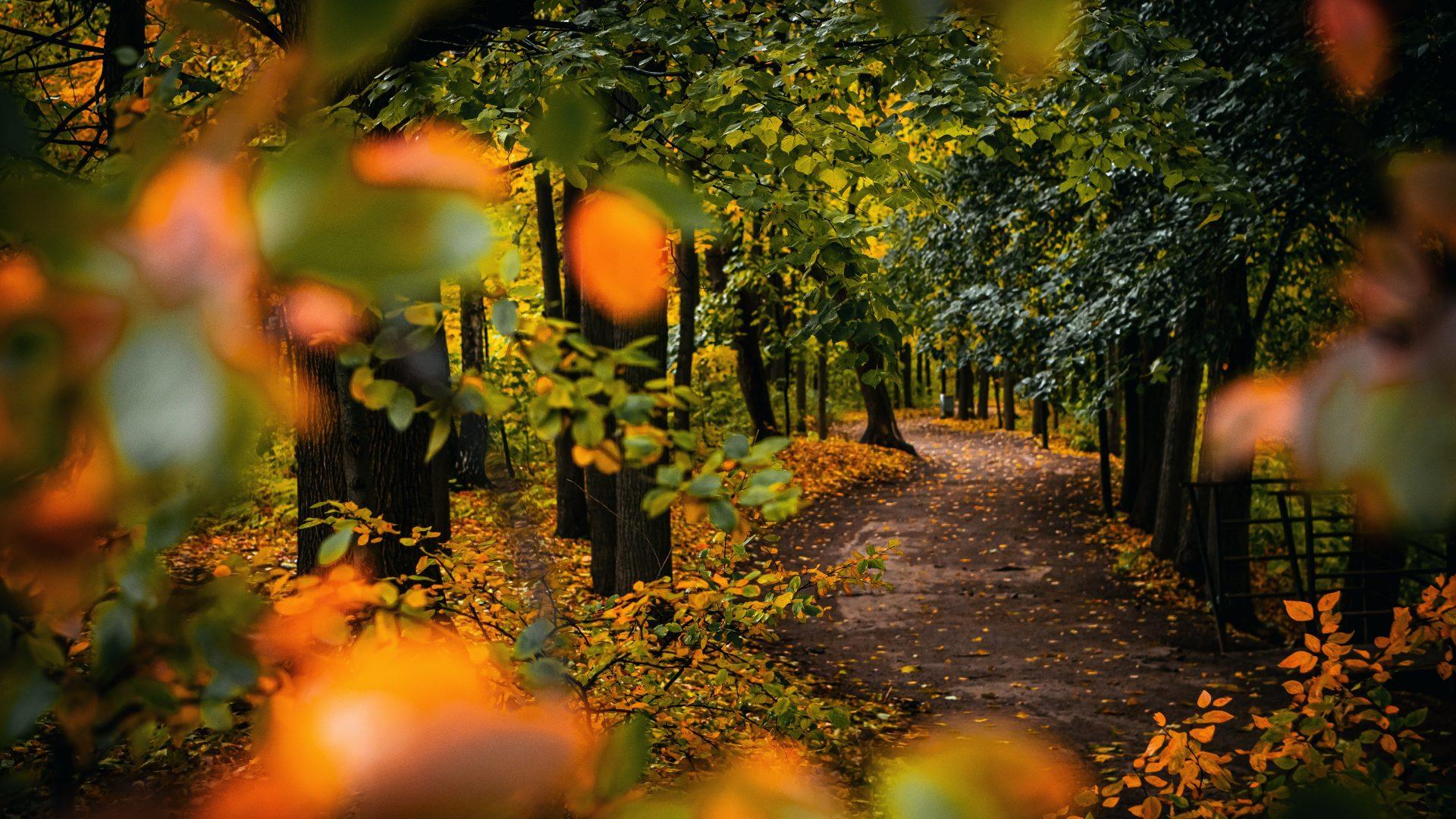 autumn-environment-fall-3119483